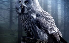 Picture forest, look, night, fog, owl, bird, stump, grey, twilight, owl