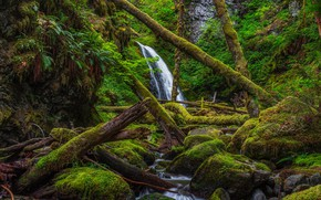 Picture forest, trees, waterfall, moss, thicket