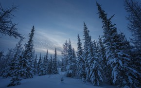 Picture winter, forest, snow, ate, Russia, Yamal