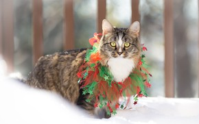Picture winter, cat, cat, snow, holiday, new year, Christmas, costume, decoration, walk