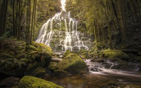 Picture greens, forest, trees, stream, stones, waterfall, moss