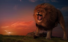 Picture sunset, Leo, the king of beasts, wild cat, aggressive