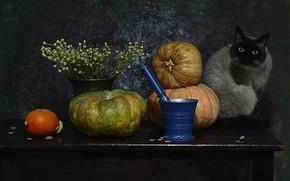 Picture cat, cat, look, face, table, bouquet, pumpkin, still life, items, pistil, Siamese, composition, mortar
