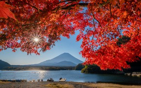 Picture Japan, leaves, lake, mount Fuji, autumn