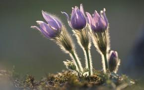 Picture macro, background, spring, trio, Sleep-grass, Cross