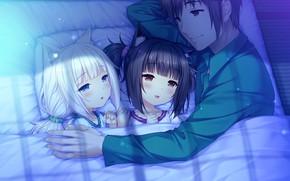 Picture girls, anime, guy, Nekopara