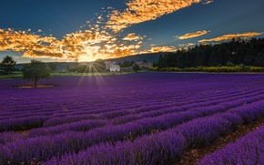 Picture field, forest, the sky, clouds, trees, houses, the rays of the sun, lavender