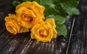 Picture flowers, bouquet, yellow roses