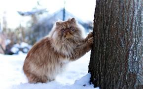 Picture cat, snow, tree