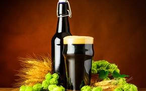 Picture foam, glass, beer, malt, beer, hops