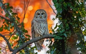 Picture autumn, branches, owl, bird, foliage, owl