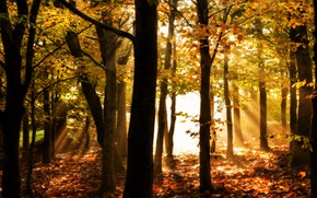 Picture autumn, forest, leaves, rays, light, Park, Golden autumn
