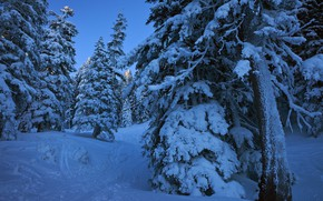 Picture winter, forest, snow, trees, landscape, nature, ate, path