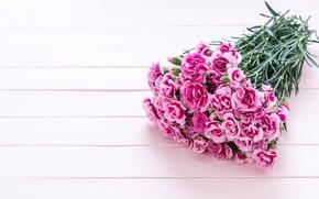 Picture pink, bouquet, clove