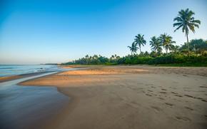 Picture beach, palm trees, coast, Sri Lanka, Bentota Beach