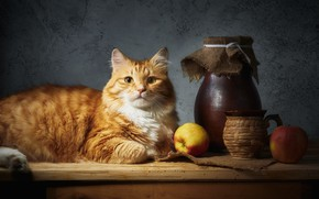 Picture cat, cat, look, face, light, pose, comfort, the dark background, table, wall, apples, food, red, …