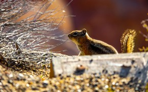 Picture light, branches, nature, profile, Chipmunk, bokeh, rodent