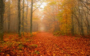 Picture autumn, forest, trees, branches, fog, Park, branch, morning, alley, falling leaves, the colors of autumn, …