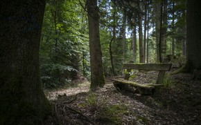 Picture forest, nature, bench