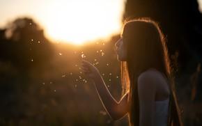 Picture girl, sunset, dandelion, Mar Kalina