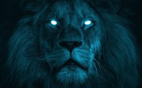 Picture eyes, look, face, light, the dark background, rendering, fiction, color, portrait, Leo, art, mane, white, …