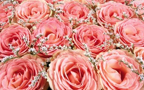 Picture roses, bouquet, pink roses