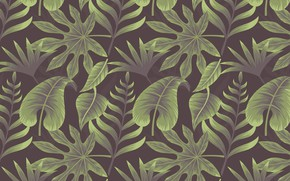 Picture background, texture, background, Leaves, Tropical, Plant
