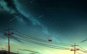 Picture cat, power lines, shooting stars
