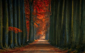 Wallpaper road, trees, nature, autumn, leaves, Forest, trunks