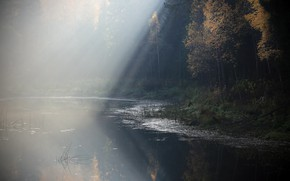 Picture forest, fog, lake, morning