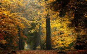 Picture autumn, forest, trees, Netherlands