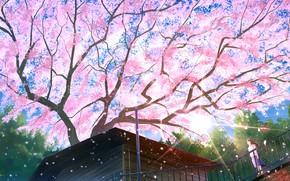 Picture roof, house, tree, spring, Sakura, the bridge