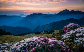 Picture the sky, the sun, clouds, sunset, flowers, mountains, nature, fog, hills, the slopes, beauty, spring, …