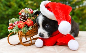 Picture look, red, pose, background, black and white, toys, dog, baby, Christmas, puppy, New year, lies, …