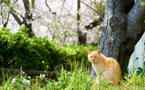 Picture greens, cat, grass, cat, flowers, nature, tree, spring, garden, red, walk