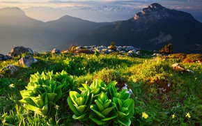 Picture grass, landscape, mountains, nature, stones, vegetation, France, Alps, Saint-Pierre-de-Chartreuse