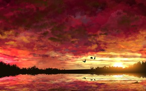 Picture water, the sun, trees, sunset, birds