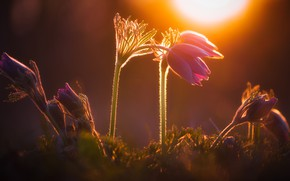 Picture light, sunset, flowers, nature, the dark background, spring, lilac, bokeh, cross