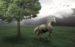 Wallpaper field, forest, birds, nature, fog, rendering, tree, horse, horse, art, horse