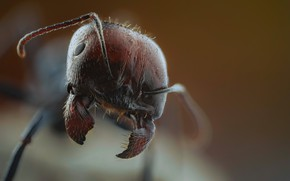 Picture macro, nature, ant