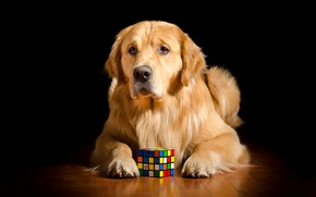 Picture each, dog, Rubik's cube