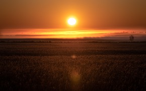 Picture field, the sky, grass, the sun, clouds, light, sunset, fog, meadow, bright, sunset