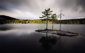 Picture forest, lake, island
