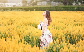 Picture field, girl, flowers, nature, yellow, dress, hat, walk, Asian