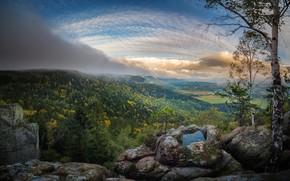 Picture forest, the sky, landscape, nature, beauty, cloud