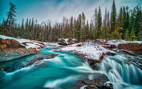 Picture forest, snow, river, Canada, Canada, British Columbia, British Columbia, Kicking Horse River, Yoho National Park, …