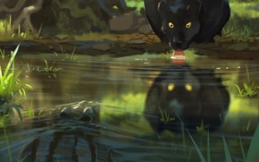 Picture Water, Panther, Predator, Big cat, Пьет