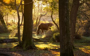 Picture greens, forest, light, branches, nature, horse, trunks, foliage, horse, grazing