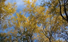 Picture autumn, trees, yellow leaves, Meduzanol ©, October 2009