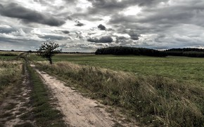 Picture road, field, the sky